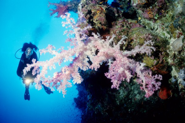 An Amazing Red Sea Diving Package That You Should Know About